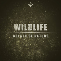 Wildlife - Breath of Nature
