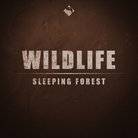 Wildlife - Sleeping Forest