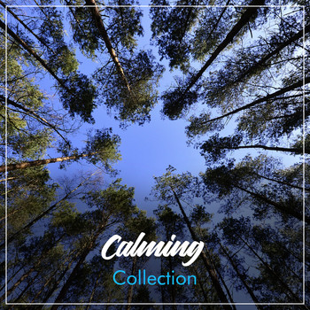 Massage Tribe, Massage, Massage Therapy Music - #19 Calming Collection for Massage Therapy