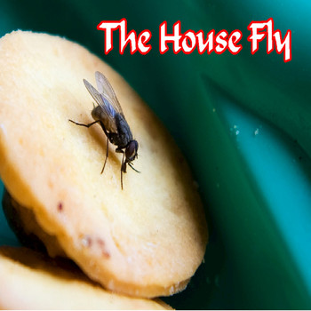 Mike Jones - The House Fly