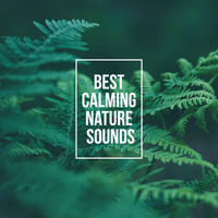 Nature Sounds - Best Calming Nature Sounds – Relax Your Body & Mind with Nature New Age Music
