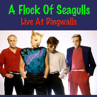 A Flock Of Seagulls - A Flock Of Seagulls Live At Dingwalls