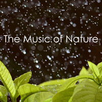 Ocean Waves For Sleep, White! Noise and Nature Sounds for Sleep and Relaxation - The Music of Nature
