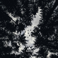 Alanos - The Forest