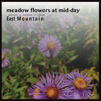 East Mountain - Meadow Flowers at Mid-Day