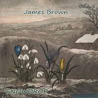 James Brown - Snowdrop