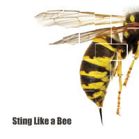 Bam Bam - Sting Like a Bee