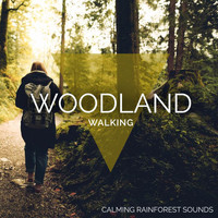 Calming Rainforest Sounds - Woodland Walking