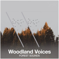 Forest Sounds - Woodland Voices
