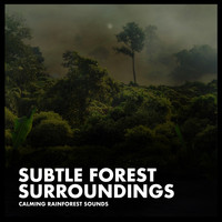 Calming Rainforest Sounds - Subtle Forest Surroundings