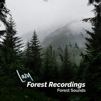 Forest Sounds - Lazy Forest Recordings