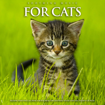 Cat Music, Music For Cats, Music for Pets - Soothing Music For Cats: Relaxing Piano For Cats, Music For Pets, Music For Cats While You're Gone and The Best Cat Music
