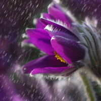 Lullaby Rain, Nature Sounds Radio, Nature Recordings - Autumn Nighttime 2019: Gentle Raindrops for Relaxation