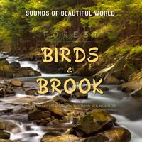 Sounds of Beautiful World - Forest: Birds & Brook (Nature Sounds for Relaxation, Meditation, Healing & Sleep)