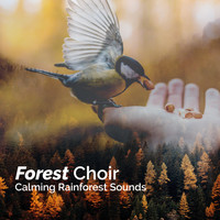 Calming Rainforest Sounds - Forest Choir