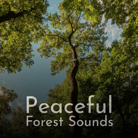 Path to the Wild - Peaceful Forest Sounds