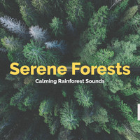 Calming Rainforest Sounds - Serene Forests