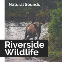 Natural Sounds - Riverside Wildlife