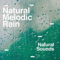 Natural Sounds - Natural Melodic Rain