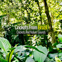 Crickets from Brazil - Crickets and Nature Sounds