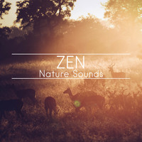 Nature Sounds, Nature Sounds Artists, Nature Sounds Nature Music - Zen Nature Sounds