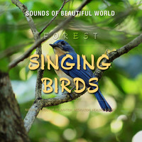 Sounds of Beautiful World - Forest: Singing Birds (Nature Sounds for Relaxation, Meditation, Healing & Sleep)