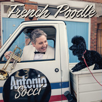 Antonio Socci - French Poodle