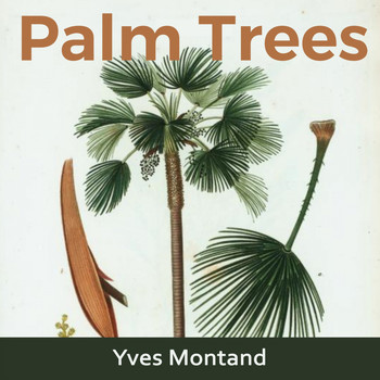 Yves Montand - Palm Trees