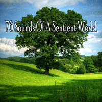 Classical Study Music - 76 Sounds of a Sentient World