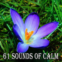 Classical Study Music - 61 Sounds of Calm