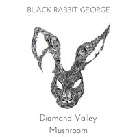 Black Rabbit George / - Diamond Valley Mushroom