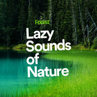 Forest - Lazy Sounds of Nature