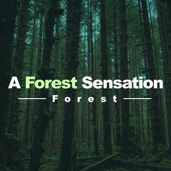 Forest - A Forest Sensation