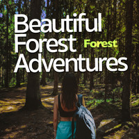Forest - Beautiful Forest Adventures