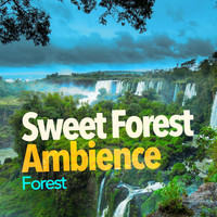 Forest - Sweet Forest Ambience