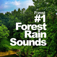 Forest - #1 Forest Rain Sounds