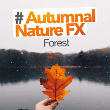 Forest - # Autumnal Nature FX