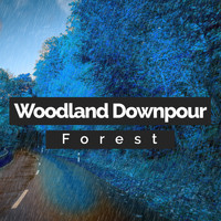 Forest - Woodland Downpour