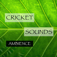 Cricket Sounds - Cricket Sounds Ambience