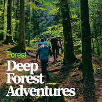 Forest - Deep Forest Adventures