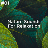 Sleep Sounds of Nature and Nature Sound Collection - #01 Nature Sounds For Relaxation