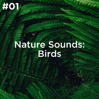 Sleep Sounds of Nature and Nature Sound Collection - #01 Nature Sounds: Birds