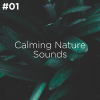Sleep Sounds of Nature and Nature Sound Collection - #01 Calming Nature Sounds