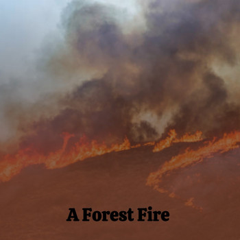 Various Artists - A Forest Fire