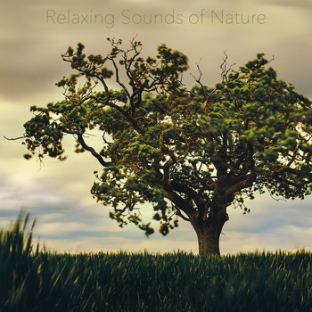 Nature Sounds, Nature Sounds Artists, Nature Sounds Nature Music - Relaxing Sounds of Nature