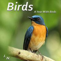 John Nature - Birds - A Year With Birds