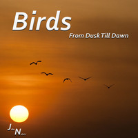 John Nature - Birds - From Dusk Till Dawn