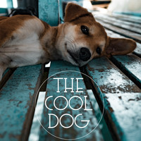 Music for Calming Dogs, Music for Leaving Dogs Home Alone, Music For Dogs - The Cool Dog