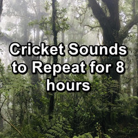 Crickets - Cricket Sounds to Repeat for 8 hours