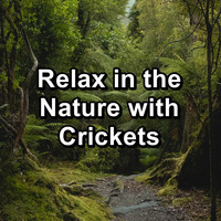 Crickets - Relax in the Nature with Crickets